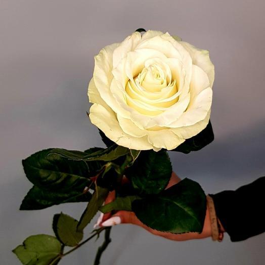 Роза Мондиаль(70см)