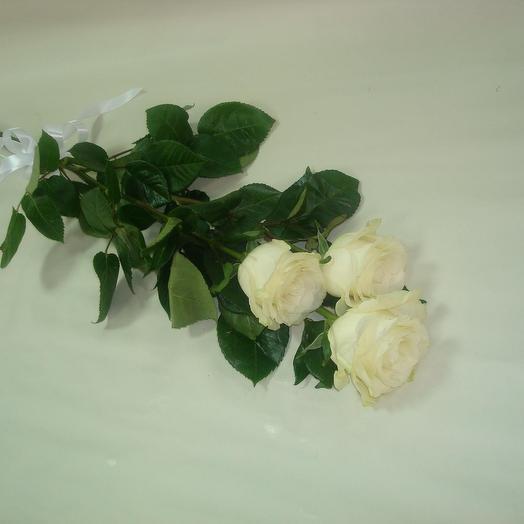 Розы 3штуки