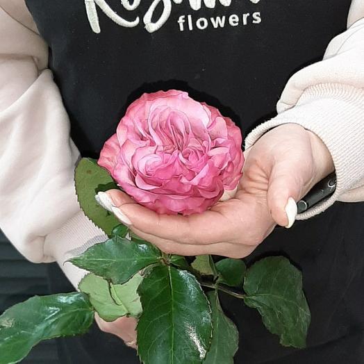 Роза пионовидная 50см