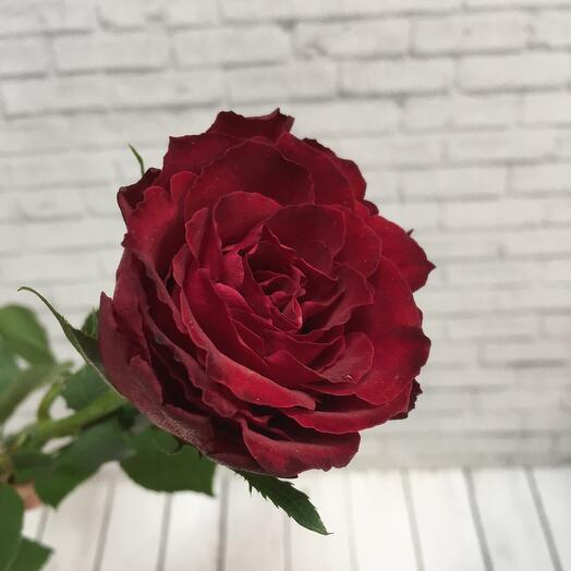 Роза красная 50 см