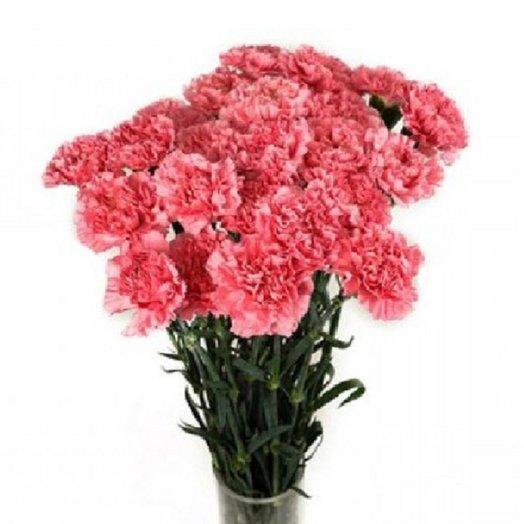 Букет из 11 розовых гвоздик: букеты цветов на заказ Flowwow