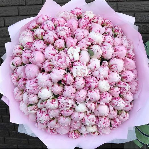 101 пион в многослойной упаковке: букеты цветов на заказ Flowwow