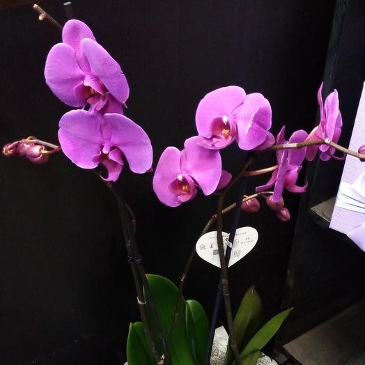 Орхидея цвета фуксии: букеты цветов на заказ Flowwow