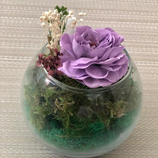 Сиреневая роза в вазе с натуральными мхом