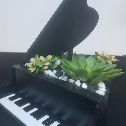 Композиция из сукулентов в рояле