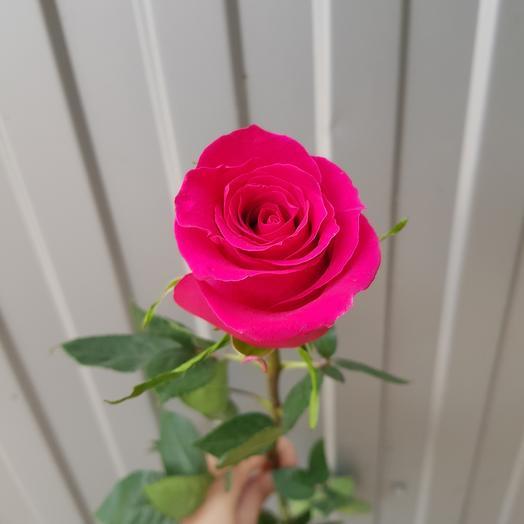 Роза-Гочи
