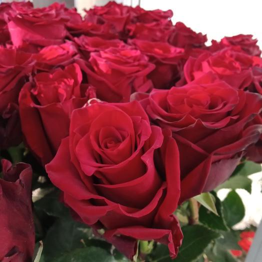 25 бордовых роз 60 см