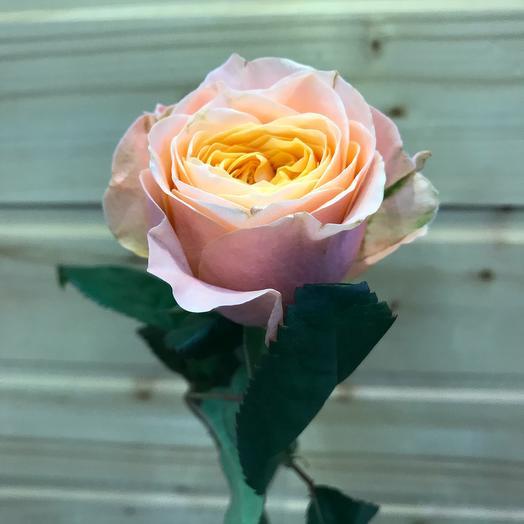 Роза «Вувузела» 40см