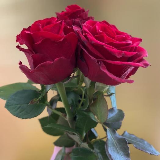 Красные розы, роза 3шт