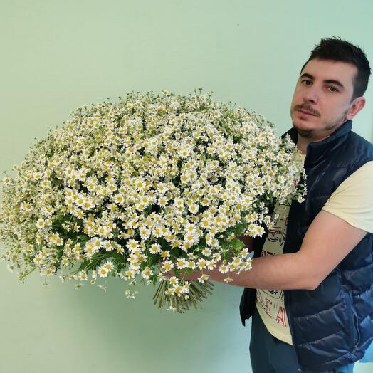 Букет из 101 кустовых ромашек