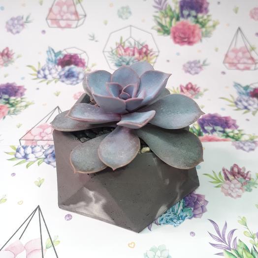 Каменная роза: букеты цветов на заказ Flowwow
