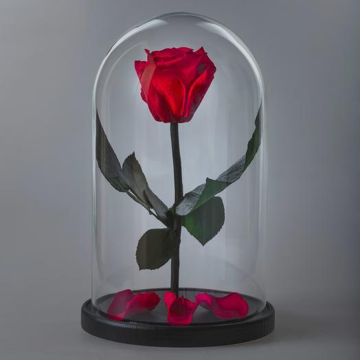 Роза в колбе красная премиум: букеты цветов на заказ Flowwow