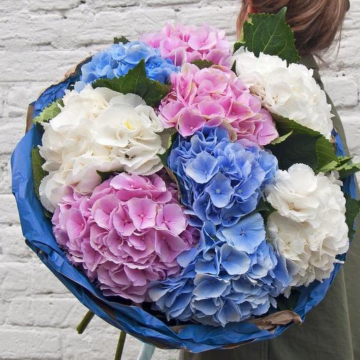 PREMIUM букет из 9 гортензий микс: букеты цветов на заказ Flowwow