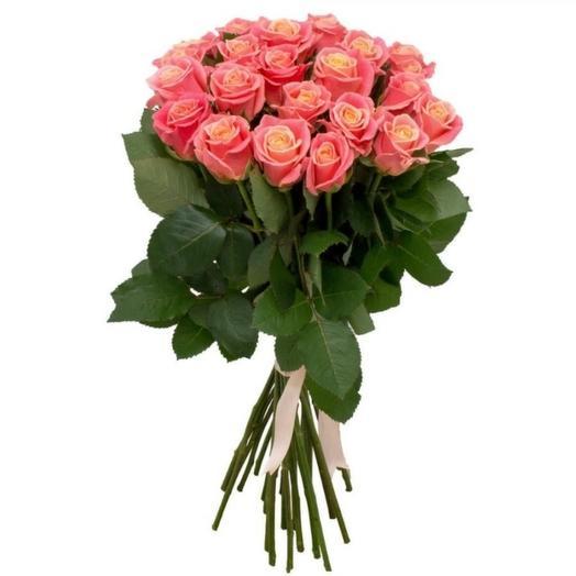 Delicate Crimean rose