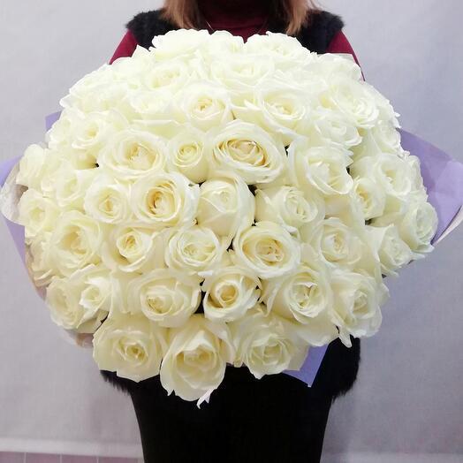 Rose white 51