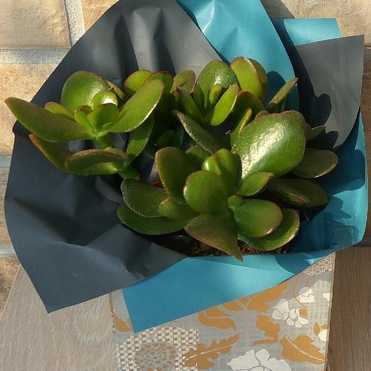 Денежное дерево в дизайнерской коробке: букеты цветов на заказ Flowwow
