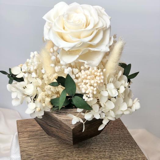 Роза в кашпо левитация