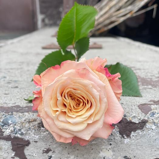 Роза Shimmer 50см