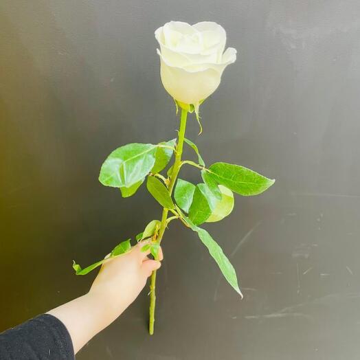Роза Tibet 70 см