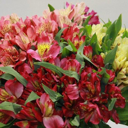 Букет из Альстромерии 31: букеты цветов на заказ Flowwow