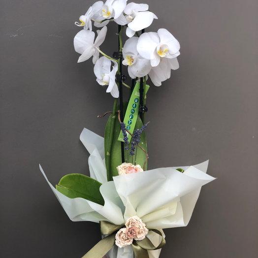 Орхидея горшечная: букеты цветов на заказ Flowwow
