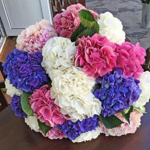 Букет из 19 гортензий: букеты цветов на заказ Flowwow