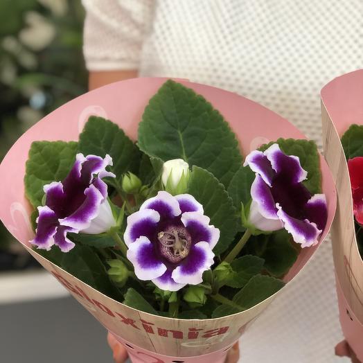 Глоксиния в горшке  фиолетова: букеты цветов на заказ Flowwow
