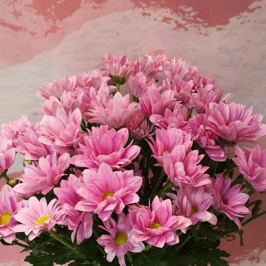 7 веток хризантем