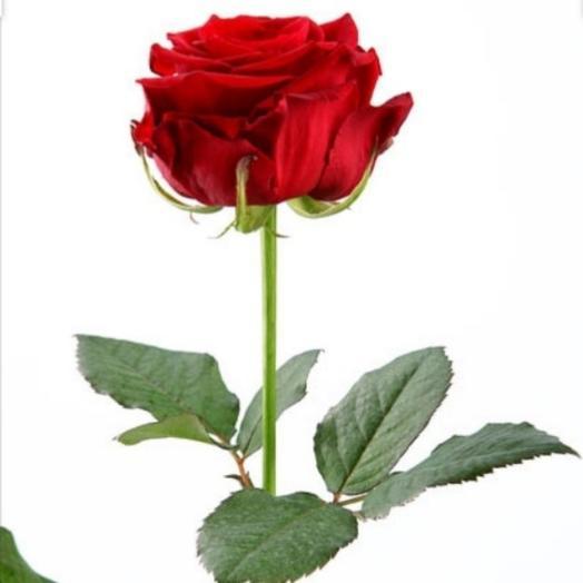 Красная роза 60см