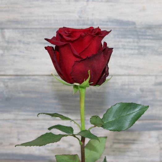 Роза эксплоер 70 см