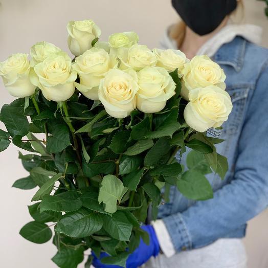 Белая Роза сорта «Мондиал»