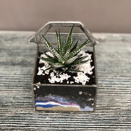 Суккулент во флорариуме