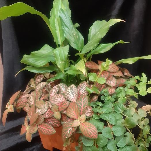 Сад в миниатюре: букеты цветов на заказ Flowwow