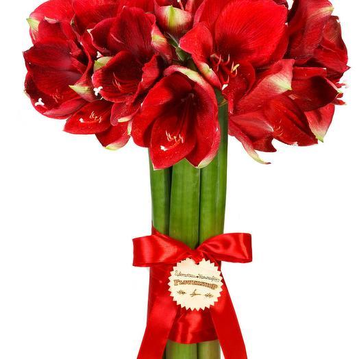 Амарилис: букеты цветов на заказ Flowwow