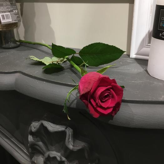 Роза малиновая