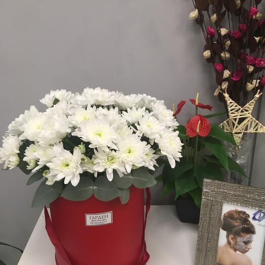 Хризантема в коробке