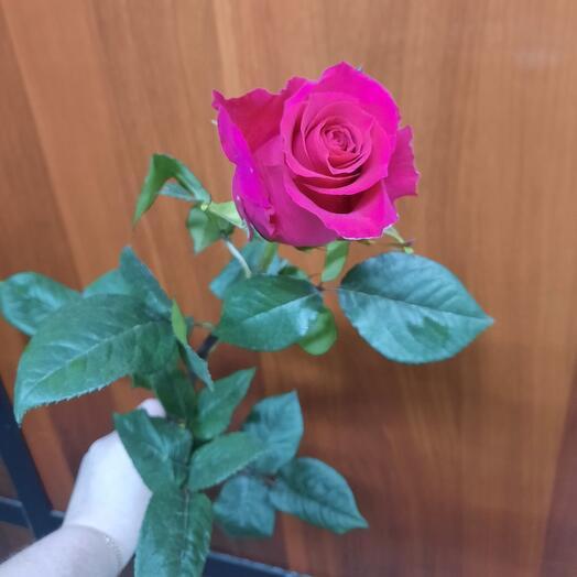 Роза Готча эквадор