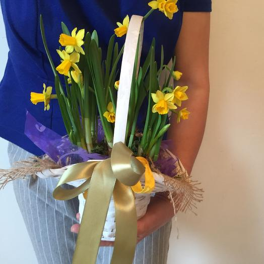 Весенее  лукошко с нарциссами «макси»: букеты цветов на заказ Flowwow