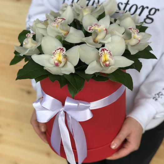 Коробки с цветами. Орхидея. Цимбидиум. N467: букеты цветов на заказ Flowwow