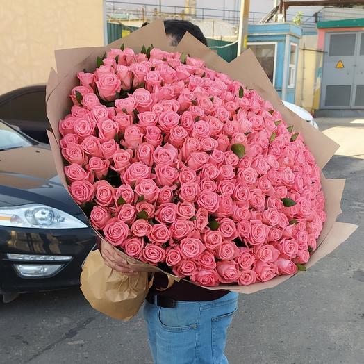 201 роза Анна Карина