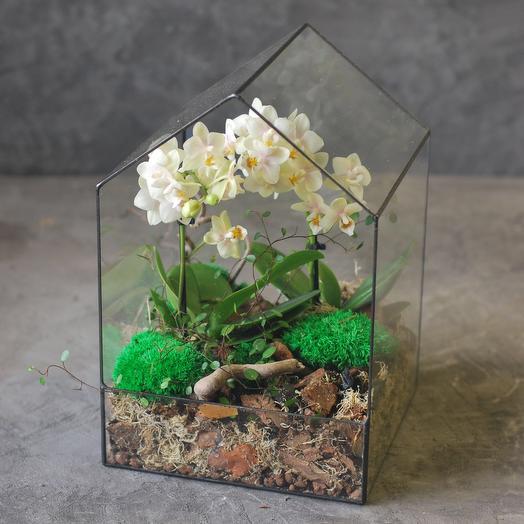 Флорариум-домик с мини-орхидеей
