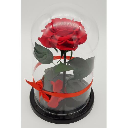 Роза в колбе премиум хит Красная 27*15*11см