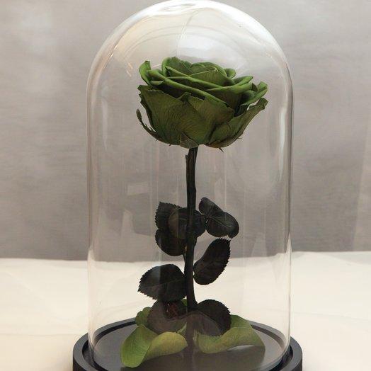 Роза в колбе RozaRose Медиум Зеленая