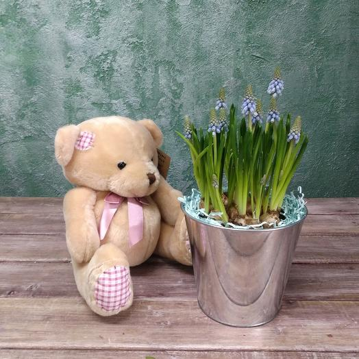 Мускари в дизайнерском горшке с подарком: букеты цветов на заказ Flowwow