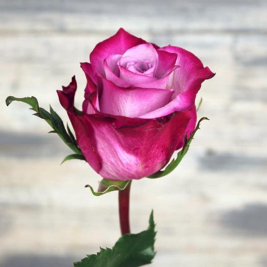 Роза Дип Перпл  Эквадор 40 см