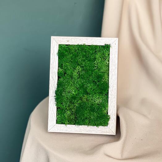 Картина из стабилизированного мха