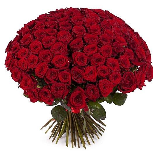 101 роза красная 70 см