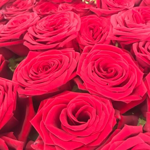 Роза гран-при  70 см