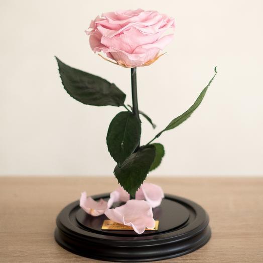 Роза в колбе Премиум розовая: букеты цветов на заказ Flowwow
