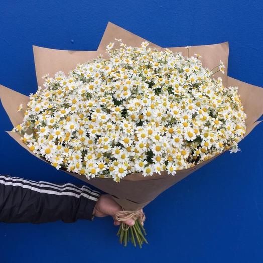 Танацетум Камилла: букеты цветов на заказ Flowwow